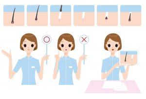髪の毛の仕組み