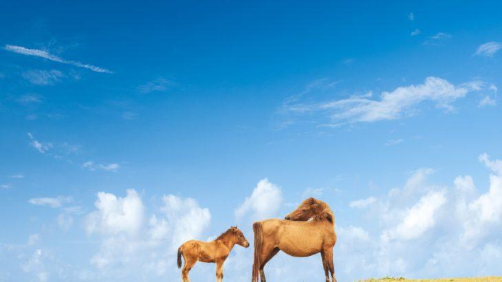 ルグゼバイブの「馬プラセンタ」と「コロストラム」ってどんな成分?
